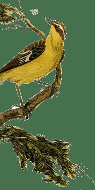 Infame's Bird